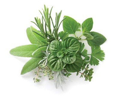 Fresh Cut Fresh Picked Herbs