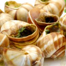 Snail Shells Empty - tania, 170's